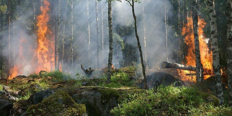 Abertas candidaturas aos projetos Florestais para áreas ardidas - Maxfinance Portugal - CSI